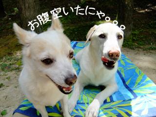 mu.shiro.jpg